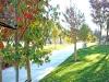 cardoza-park-city-of-milipitas-7